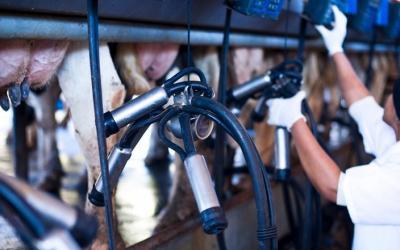 CNA debate melhorias para a cadeia produtiva do leite