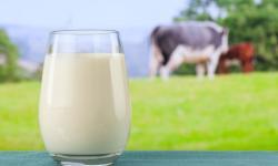 Balance del mercado internacional de la leche en 2018