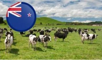 Nueva Zelanda alcanzó un récord de producción con menos vacas