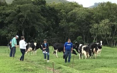 Ferramenta identifica a atualização tecnológica da propriedade leiteira