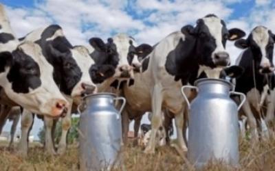 Parceria entre Embrapa e Nestlé vai desenvolver protocolo para leite de baixo carbono