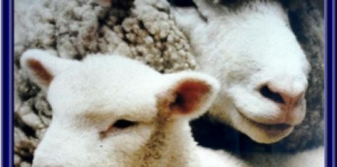 Leite de ovelha. Alimento saboroso e saudável