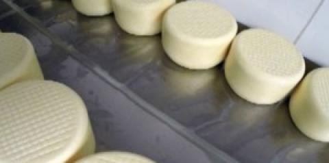 Produção do queijo minas artesanal em fazenda de Araxá