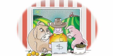Mais fluxo no planejamento das fazendas leiteiras