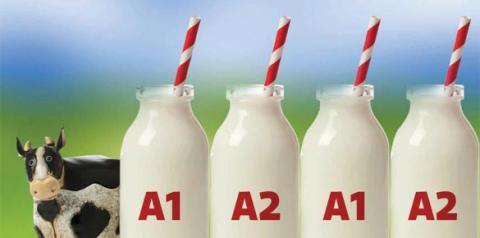 Produção de leite A2