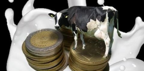 Tres miradas sobre el precio, el gran problema de la lechería argentina