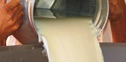 Preço do litro do leite registra média de R$ 1,03 no primeiro trimestre em MS, diz Famasul