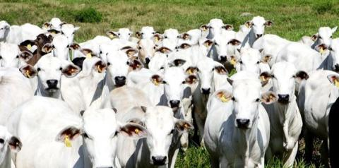 Linhas de crédito liberadas para produtor de leite e indústria vêm como