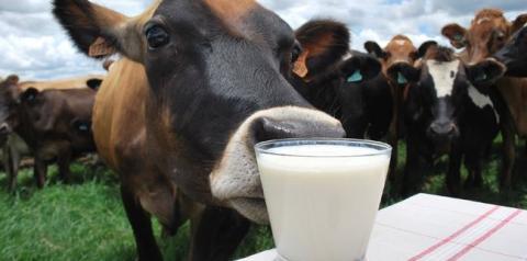 Melhor qualidade de vida faz agrônomo trocar cidade pelo campo para produzir leite orgânico, diz Emater/MG