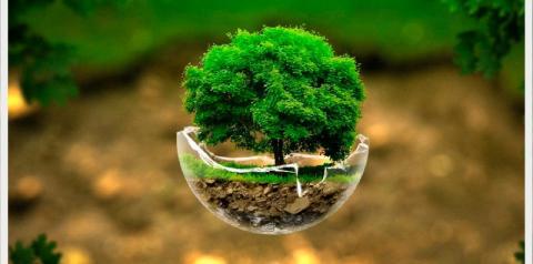 Pesquisadoras da Epamig participam de publicação digital sobre agroecologia