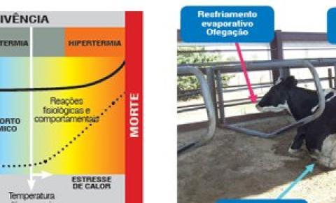 Conforto térmico: pecuaristas cuidam para que gado sinta menos calor