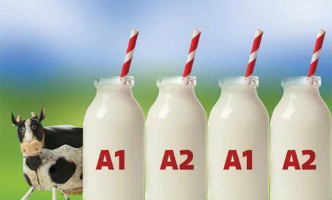 Já é hora de direcionar a seleção para a produção de leite A2?