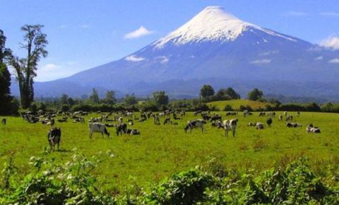Sector lácteo presenta hoja de ruta para los próximos 4 años en Chile