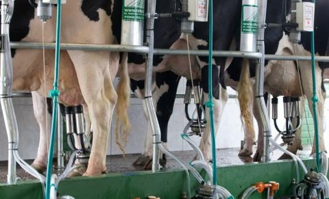 Preço ao produtor de leite sobe pelo quinto mês seguido