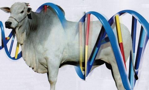 Fusão cria a maior empresa de genética bovina do mundo.