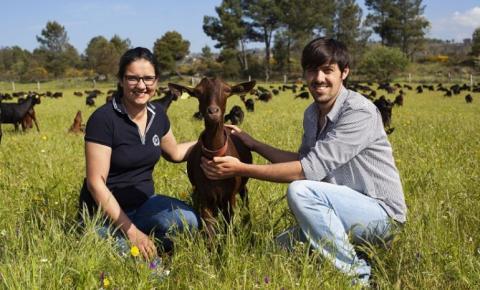 Portugueses já produzem queijo com um toque de Bruxelas