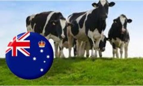 Australia: Cómo ganar en sustentabilidad ordeñando una sola vez por día