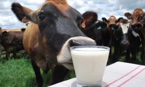 Custo da produção de leite dificulta para o pequeno produtor