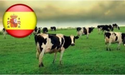 España: La falta de comercialización obliga a los ganaderos a tirar su producción de leche