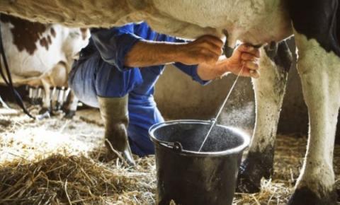 Produção de leite no Brasil está caminhando para redução no segundo trimestre