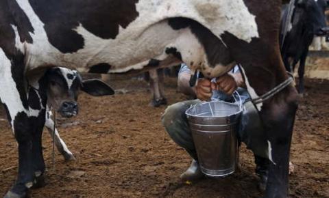 Governo do Estado de Santa Catarina investe R$ 1 milhão em ação para apoiar produtores de leite em época de pandemia