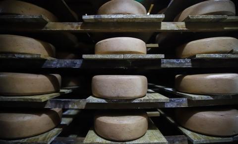 Pesquisa com apoio da FAPESP traça perfil da produção paulista de queijos artesanais