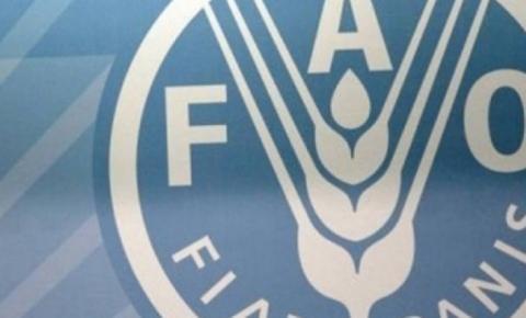 Preços globais de alimentos recuam em junho, com forte queda em laticínios, diz FAO