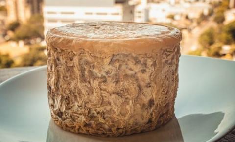 Consideraciones sobre el moho y la levadura en el queso.