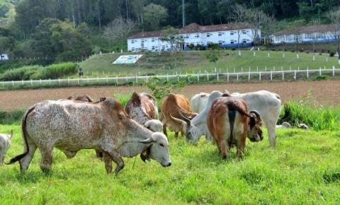 Margem de lucro de produtores de leite diminui, diz Embrapa