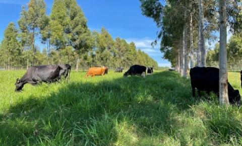Embrapa aposta na descarbonização da produção de leite