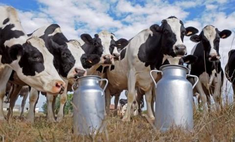 Produtores de leite de Serafina Corrêa obtêm maior lucratividade mesmo com alta dos insumos, diz Emater/RS