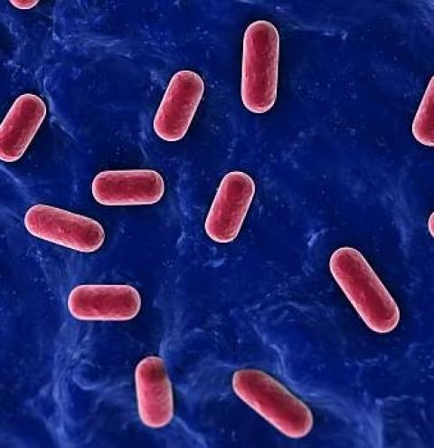 Bactérias do iogurte podem ajudar a combater doenças inflamatórias do intestino
