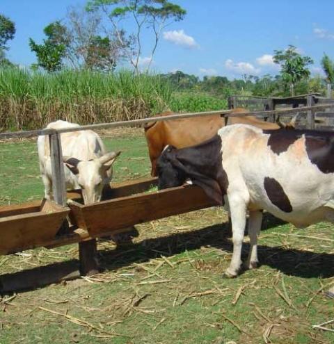 Como manejar la alimentación en época de sequía