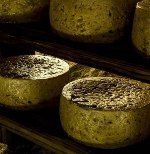 El queso espanhol más caro del mundo es un Cabrales que entra en el libro Guinness
