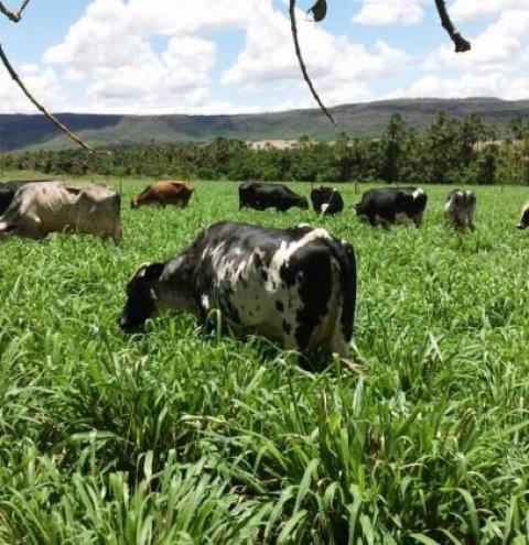 Convênio da Emater com Mapa garante resultados positivos para a pecuária leiteira no Noroeste de Minas